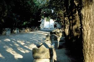 Allée des Alyscamps à Arles